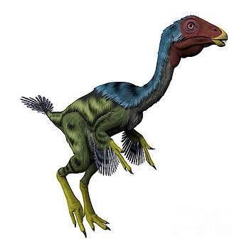 Corey Ford - Caudipteryx on White