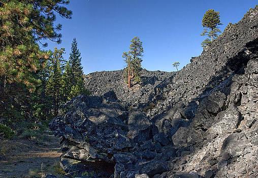 Cedars in Lava by Larry Darnell
