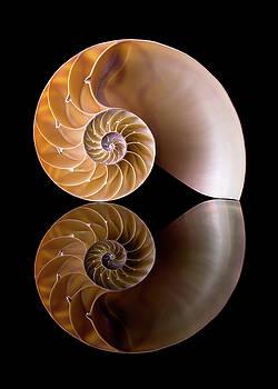 Chambered Nautilus by Jim Hughes