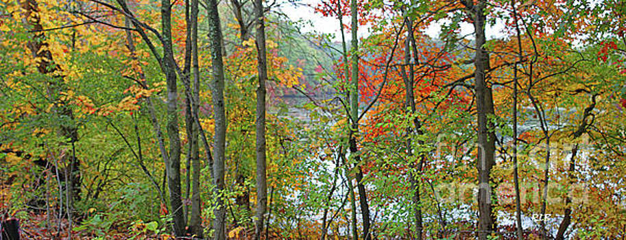 Charles River in Autumn by Rita Brown