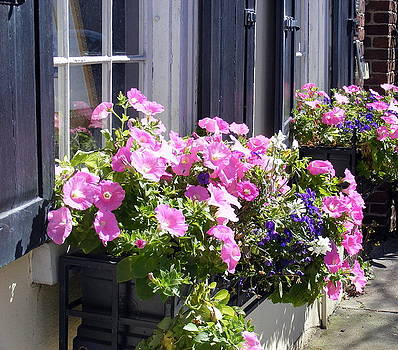 Charleston Pink White and Blue Pansies  by Elena Tudor