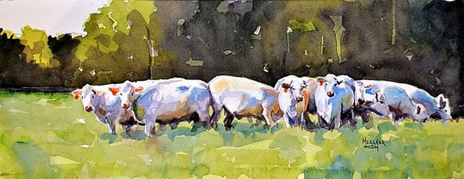 Charolais' In Blue by Spencer Meagher