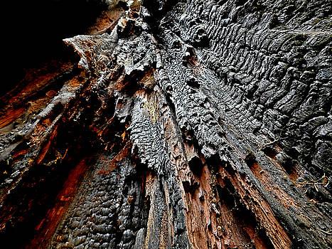 Charred Cedar by Brian Chase