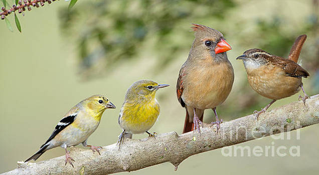 Cheerful Little Songbirds by Bonnie Barry