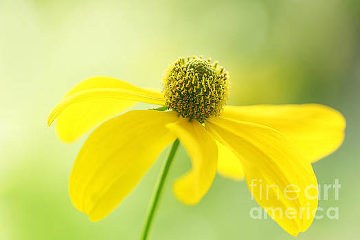 Cheerful Yellow by LHJB Photography