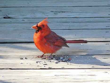 Cheery Cardinal by Nancy Spirakus