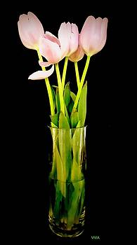 Cheery Tulips by VIVA Anderson