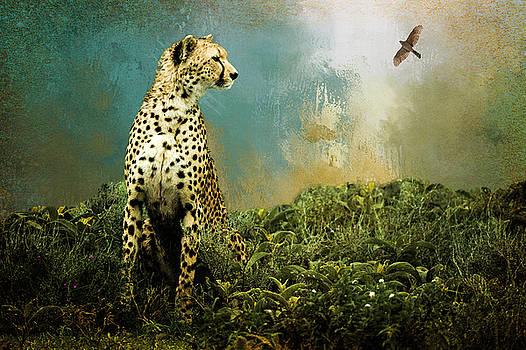 Cheetah by Diana Boyd