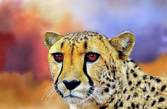 Cheetah by Janette Boyd