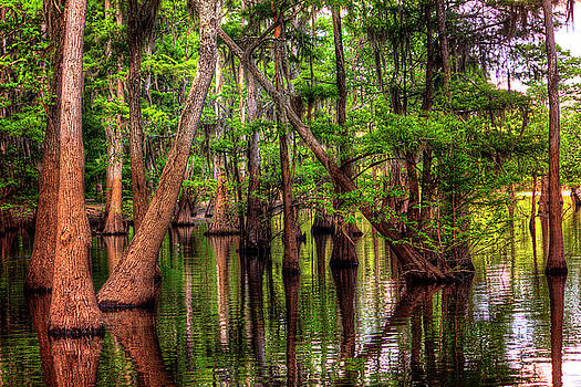 Louisiana Cheniere Lake Bayou by Ester Rogers