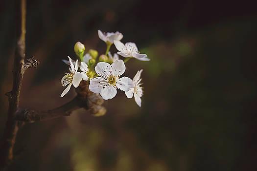 Cherry Blossom by April Reppucci