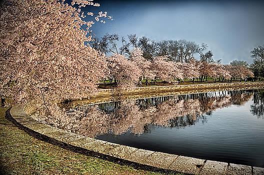 Cherry Blossom Reflections by Boyd Alexander
