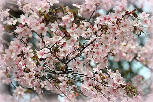 Rosanne Jordan - Cherry Blossom Vignette