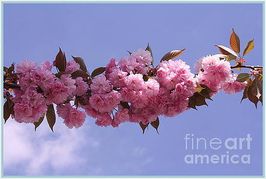 Cherry Blossoms and Blue Skies by Dora Sofia Caputo Photographic Art and Design