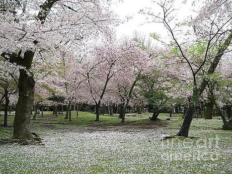 Cherry Blossoms in Nara Park by Taikan Nishimoto