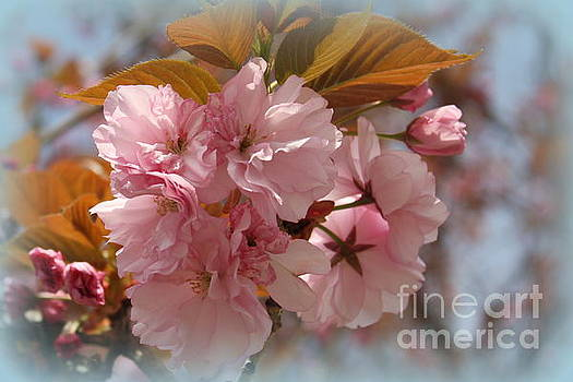 Cherry Blossoms in the Garden by Dora Sofia Caputo Photographic Art and Design