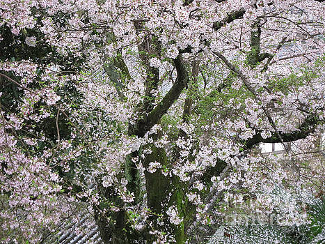 Cherry Blossoms in Todaiji by Taikan Nishimoto