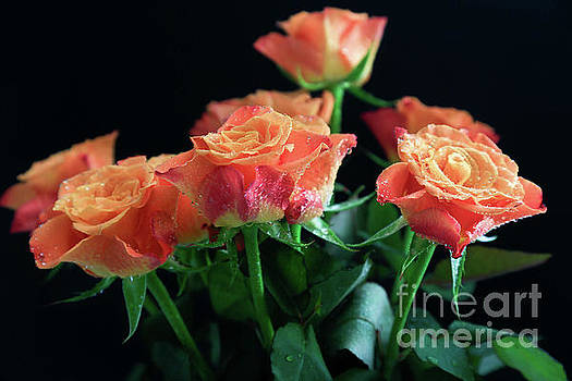 Cherry Brandy Roses by Tracy Hall