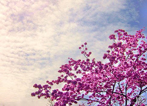 Cherry Clouds by Nicole Dumond-Barry