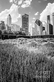 Paul Velgos - Chicago Skyline Lurie Garden Black and White Photo