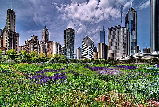 Chicago Summer by Jeff Lewis