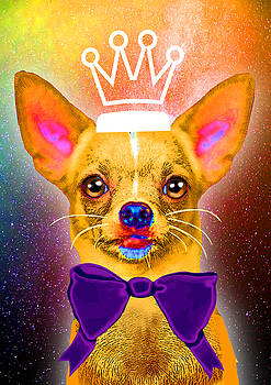 Chihuahua from Universe by Livia Danihelova