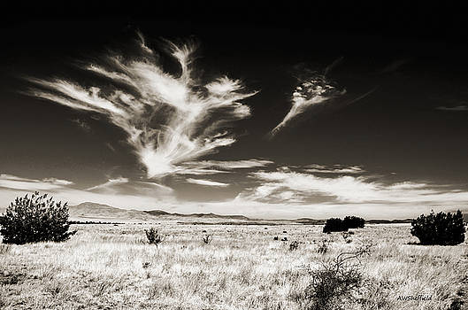 Allen Sheffield - Chihuahuan Desert in Sepia