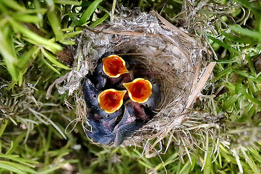 Children already born #2 by Goyo Ambrosio