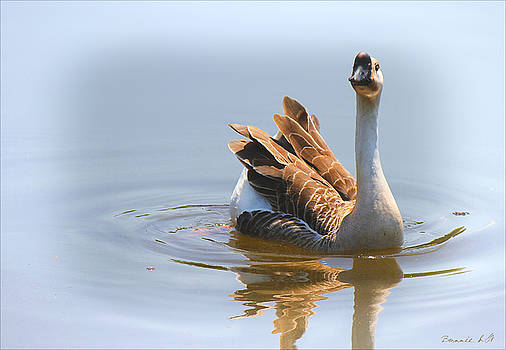 Chinese Goose by Bonnie Willis