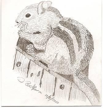 Chipmunk by Darryl Redfern