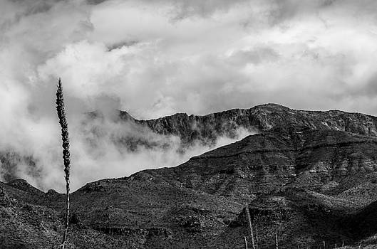 Chisos Mountains by Bob Marquis
