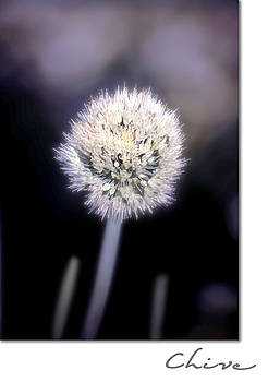 Holly Kempe - Chive