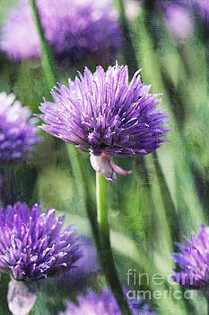 Chives by Cindi Ressler