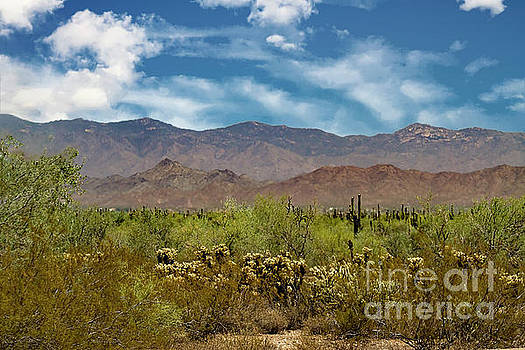 Cholla Saguaro and The Mountains by Anne Rodkin