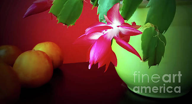 Christmas Cactus Decoration by Jasna Dragun