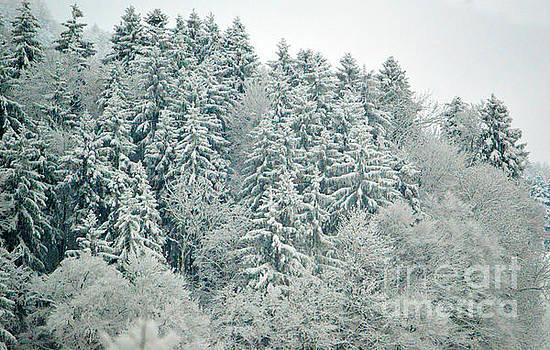Susanne Van Hulst - Christmas Forest - Winter in Switzerland