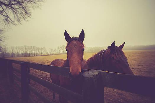 Christmas Horses by Shane Holsclaw