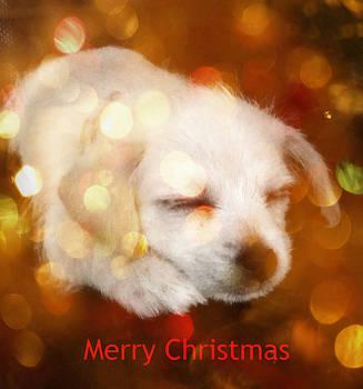 Christmas Puppy by Amanda Eberly-Kudamik