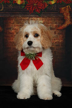 Christmas Puppy by Jim Nelson