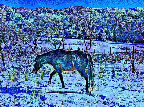Christmas Roan El Valle III by Anastasia Savage Ealy