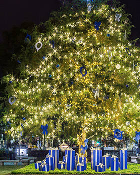 Christmas Tree Lights at Night by Brent Paape