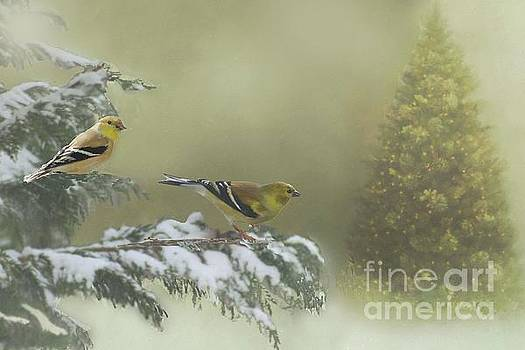 Christmas with the Goldfinches by Janette Boyd