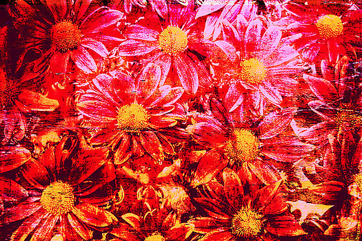 Chrysanthemums In Water 2 by Skip Nall