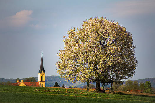 Church and cherry tree by Davorin Mance