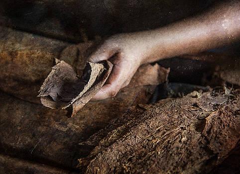 Cigar is Born by Nichon Thorstrom