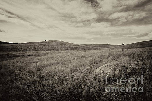 Classic Prairie by Steve Triplett