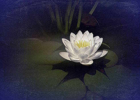 Classic Water Lily by Richard Cummings