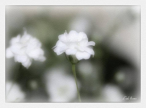 Linda Sannuti - Classic White