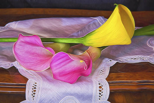 Classical Pink And Yellow Calla Lilies by Daphne Sampson