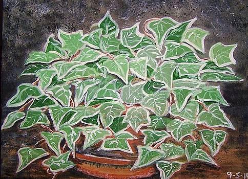 Clay pot of Ivy by Cynthia Farmer